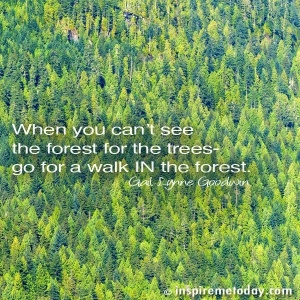 quote-when-you-cant-see-the-forest